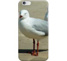 Silver Gull Australia iPhone Case/Skin