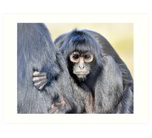 Young Adult - Spider Monkey Art Print