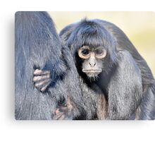 Young Adult - Spider Monkey Metal Print