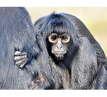 Young Adult - Spider Monkey Photographic Print