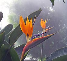 Bird of Paradise 1 by Dennis  Stanton