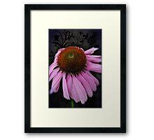Pink Cone Flower on Black Framed Print