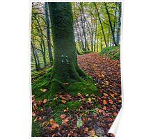 Autumn Forest Walk Poster