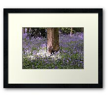 Carpet of Vibrant Purple Bluebells in a Sun Lit Wooded Forest Framed Print