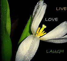 Live, Love, And Laugh by DottieDees
