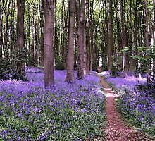 Vibrant Sea of Bluebells in a Rustic British Woodland Watercolour Scene by HotHibiscus