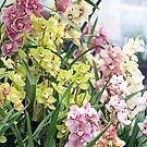 Orchid Bonanza by Lucy Hollis