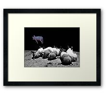 I'm the prettiest ! Look at me !  Framed Print