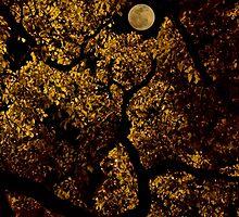 moonlit canopy by RichCaspian