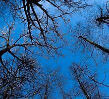 Blue heaven on earth by Sahampathi Weerasuriya