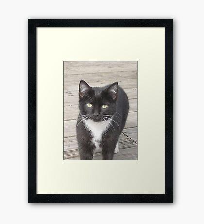 tux Framed Print