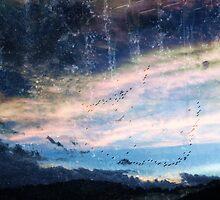 blue skys summer flys  by jaysonwoollard