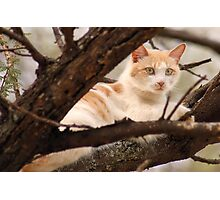 """GINGER AND HIS """"SUNSHINE"""" SPOT Photographic Print"""
