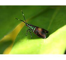 Macro moth Photographic Print