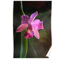orchid luxury Poster