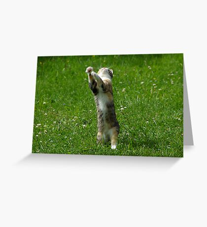 Shake it to the left, Shake it to the right... Greeting Card