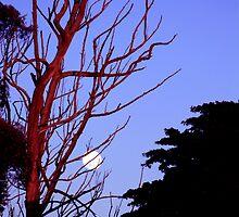 Ni ni moon by zarkhoc