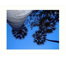 Livistonia palm canopy at Wuggubun Gorge Art Print