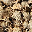 Spider conch shells by Inese