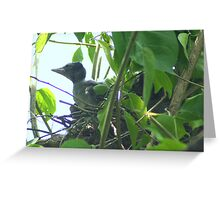 Baby Blue Jay in the Nest Greeting Card