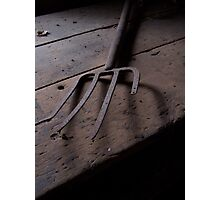Forked Photographic Print