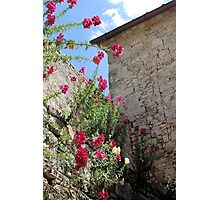 Flowers on Tuscan Stone Photographic Print