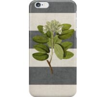 botanical stripes 5 iPhone Case/Skin