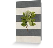 botanical stripes 5 Greeting Card
