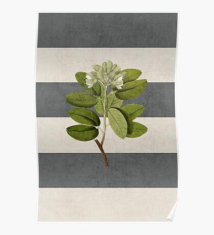 botanical stripes 5 Poster
