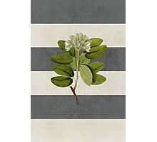 botanical stripes 5 Photographic Print