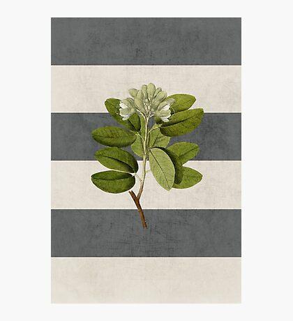 botanical stripes 5 Photographic Print