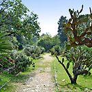 Cactus-garden on island Lokrum - Croatia by Arie Koene