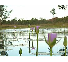 Wine glass on billabong Photographic Print