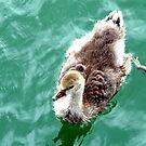 Ducky by Arie Koene