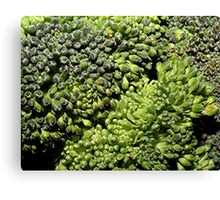 Broccoli Macro Canvas Print