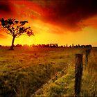 Burning skys by Rodney Trenchard