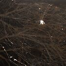 The web we weave... by LilyMunroe