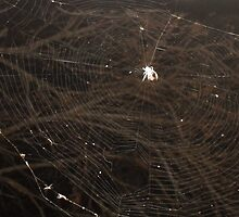 The web we weave... by LilyMunroe