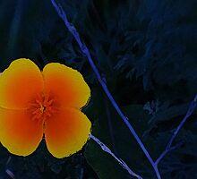 Orange and Blue by mlentz