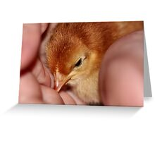 Mmm! You're warm to cuddle with! Greeting Card
