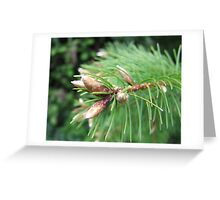 Spring Buds Greeting Card