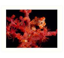 Pygmy Seahorse Art Print
