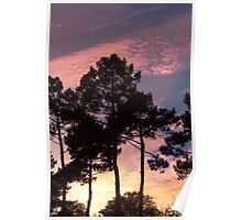 Sunset - Clouds, wind and trees Poster