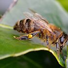 Macro Bee by relayer51