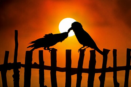 Birds Love by Norbert Probst