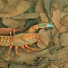 Crazy crayfish by Michael Matthews