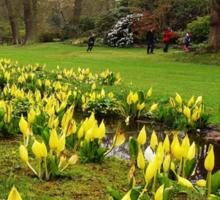 Easter In Savill Gardens Sticker