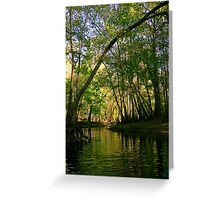 Springtime in Florida Greeting Card