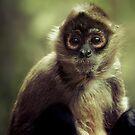 Black Handed Spider Monkey by Natalie Manuel