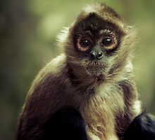 Black Handed Spider Monkey by Natalie Manuel